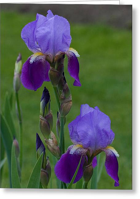 An Iris Picture Greeting Card