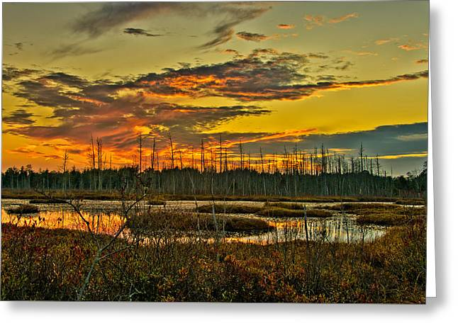 Greeting Card featuring the photograph An November Sunset In The Pines by Louis Dallara
