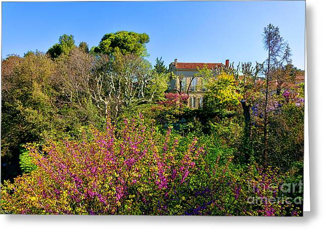 An Old House In Provence Greeting Card by Olivier Le Queinec
