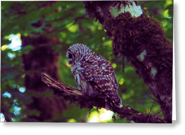 An Owl In The Forest Greeting Card by Jeff Swan