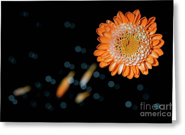 An Orange Flower With Bokeh  Greeting Card