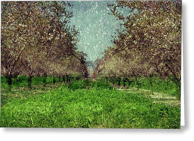 An Orchard In Blossom In The Eila Valley Greeting Card