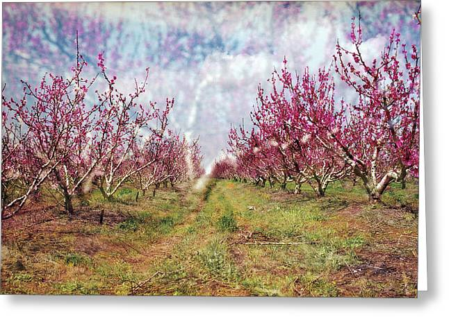 An Orchard In Blossom In The Golan Heights Greeting Card