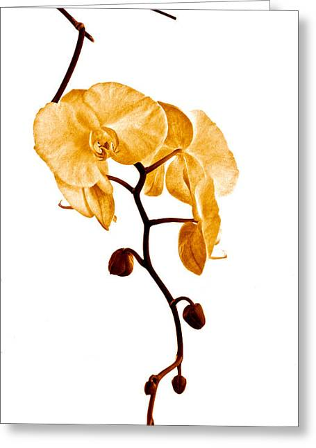 An Orchid's Perfume Greeting Card by Gwyn Newcombe