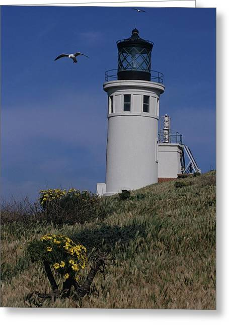 Anacapa Lighthouse And Western Gulls Greeting Card by Don Kreuter