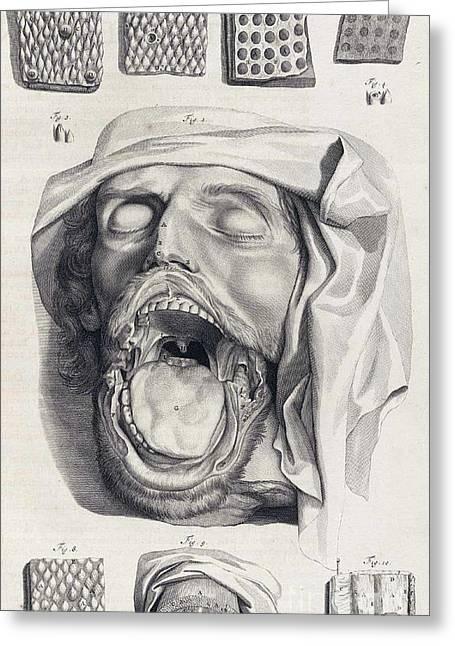 Anatomia Humani Corporis, Table 13, 1690 Greeting Card