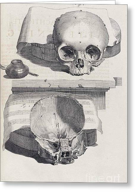 Anatomia Humani Corporis, Table 89, 1690 Greeting Card by Science Source