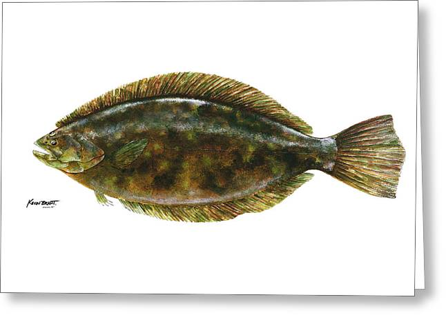 Anatomical Flounder Greeting Card by Kevin Brant