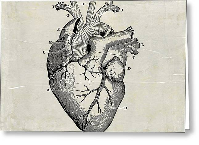 Anatomical Heart Medical Art Greeting Card