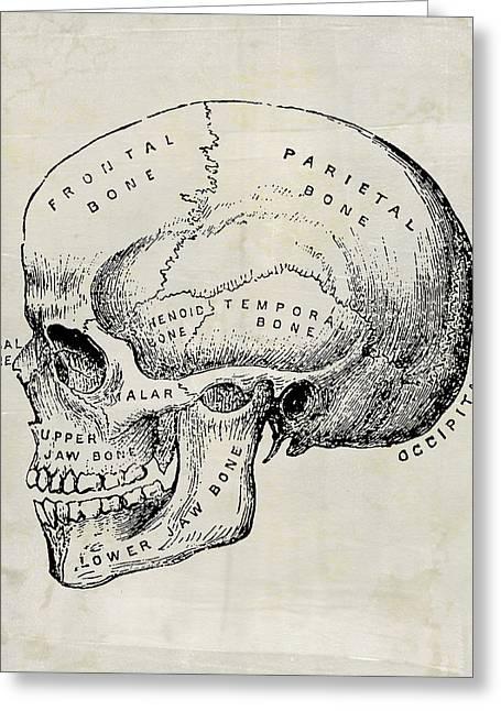 Anatomical Skull Medical Art Greeting Card