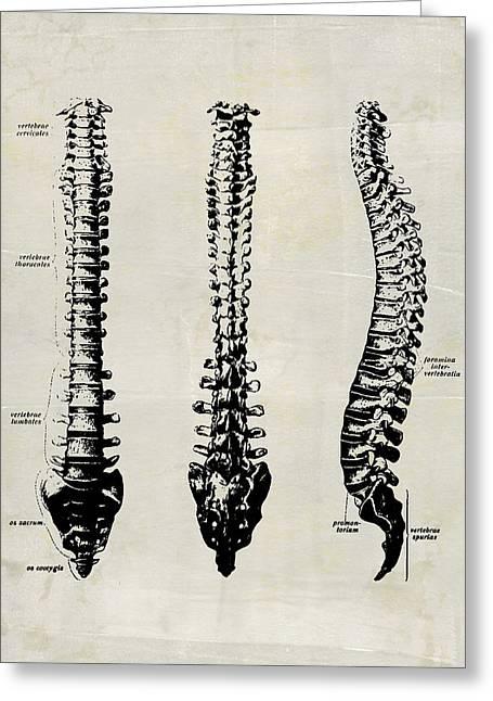 Anatomical Spine Medical Art Greeting Card
