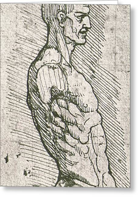 Anatomical Study Greeting Card by Leonardo Da Vinci