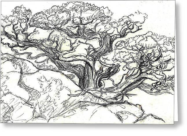 Ancient Cedar Field Sketch Greeting Card by Dawn Senior-Trask