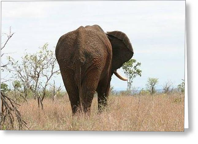 Ancient Elephant Greeting Card by Debbie Cundy
