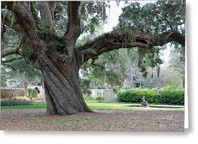 Ancient Live Oak Greeting Card by Suzanne Gaff