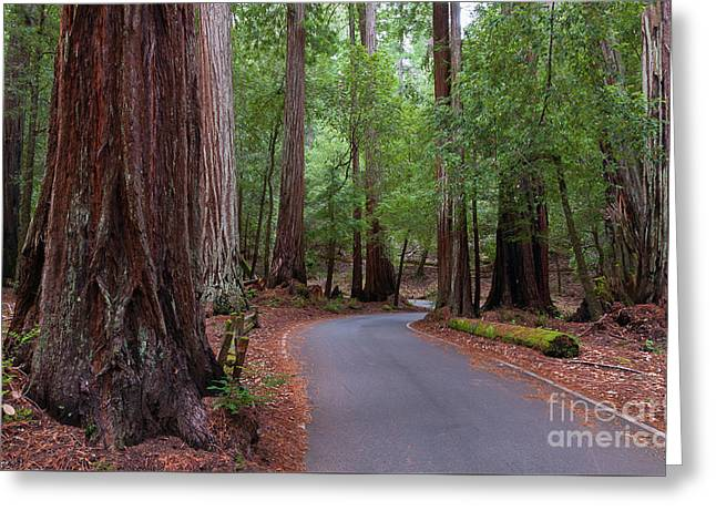 Ancient Redwoods Greeting Card