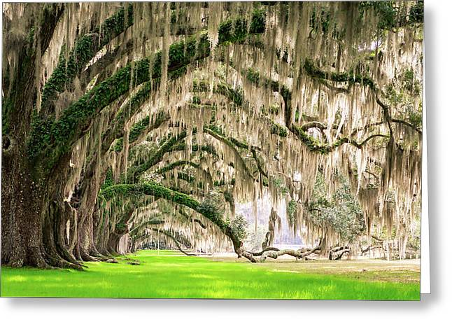 Ancient Southern Oaks Greeting Card by Serge Skiba