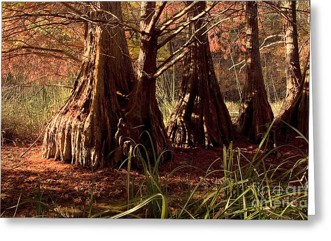 Greeting Card featuring the photograph Ancient Tree At Lake Murray by Tamyra Ayles