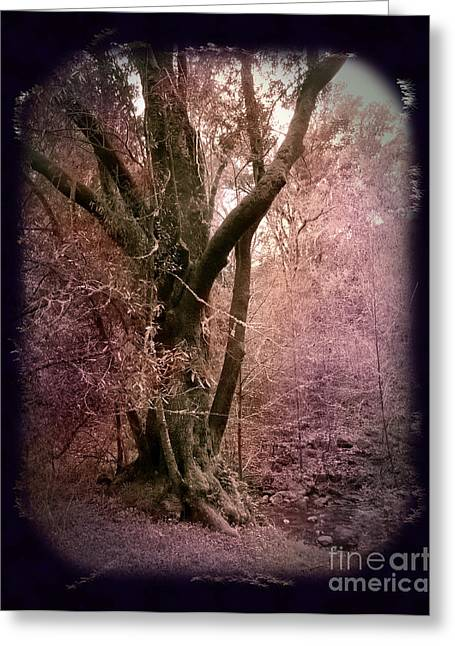 Ancient Tree By A Stream Greeting Card by Laura Iverson