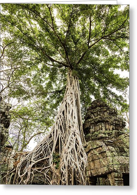 Of Temples And Trees Greeting Card
