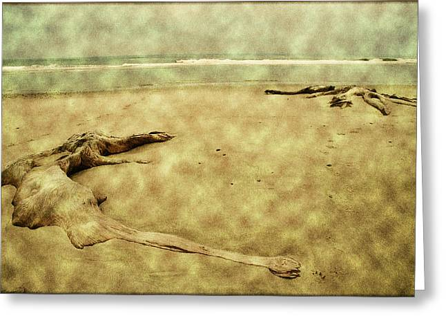 Tree Roots Greeting Cards - Ancient Tree Roots Greeting Card by Bonnie Bruno