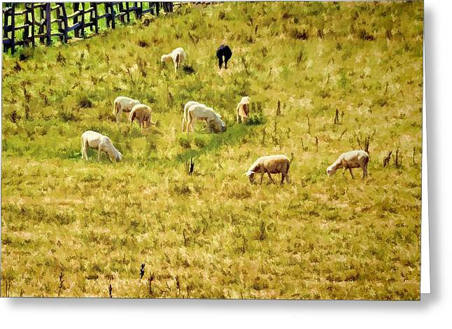 And One Black Sheep Greeting Card by Jan Amiss Photography