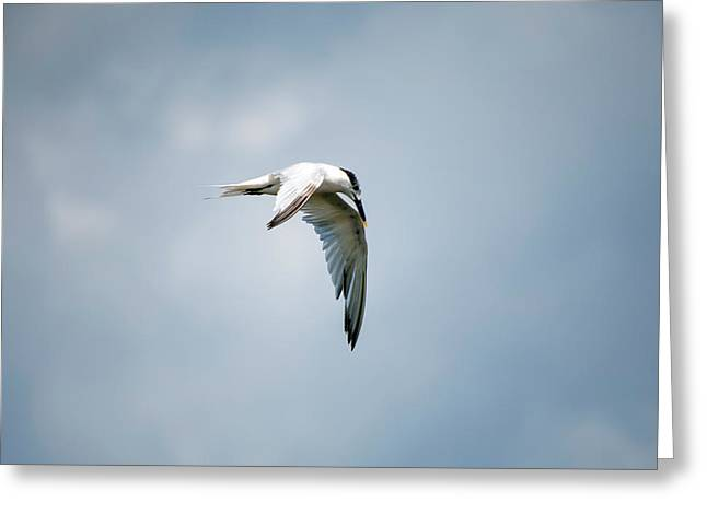 And Still The World Terns Greeting Card