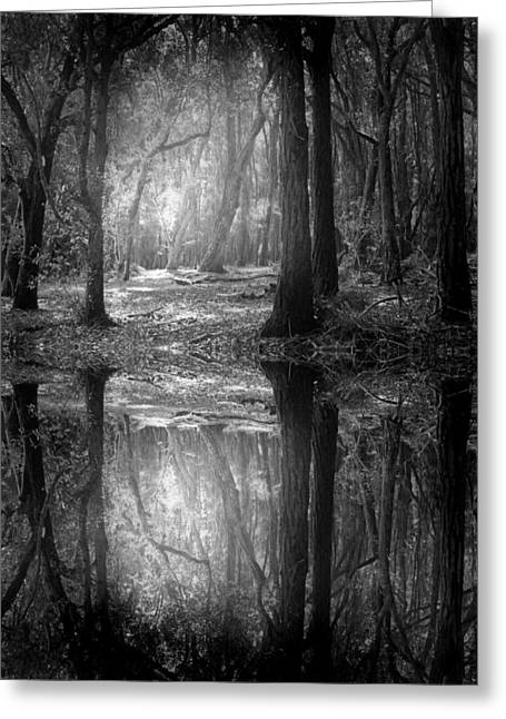 And There Is Light In This Dark Forest Greeting Card