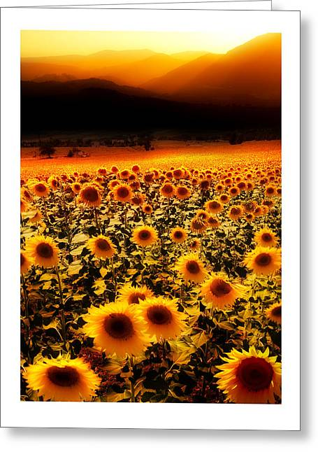 Andalucian Suns Greeting Card