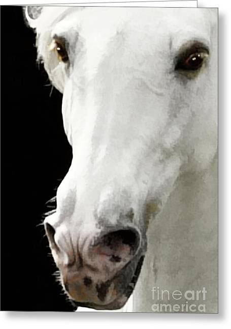 Greeting Card featuring the photograph Andalusian Stallion by Melinda Hughes-Berland