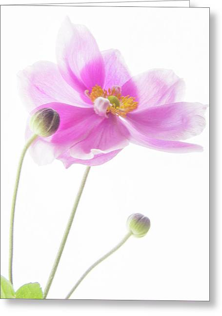Anemone Babies  Greeting Card