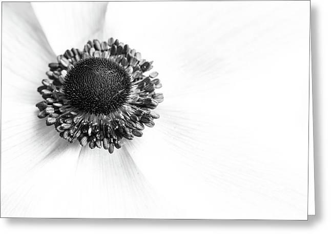 Anemone Bloom Greeting Card