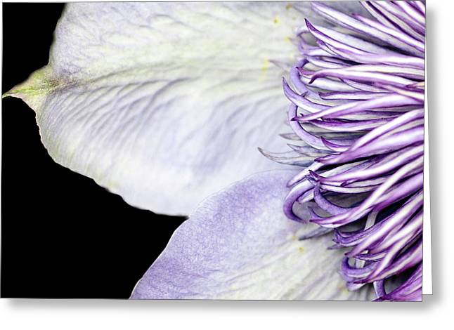 Greeting Card featuring the photograph Anemone Center Edge by Rebecca Cozart