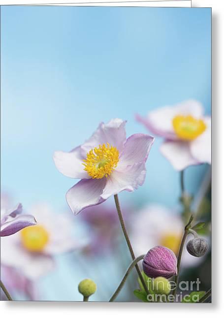 Anemone  Elegans Flowers Greeting Card