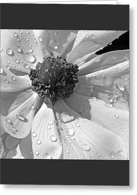 Anemone Poppy In Black And White Greeting Card by Ben and Raisa Gertsberg