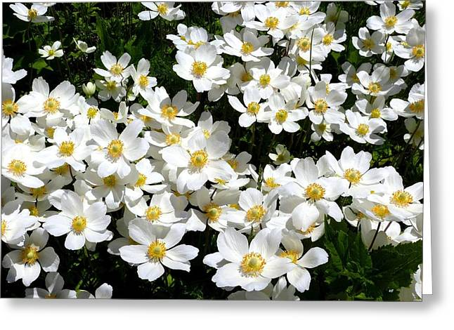 Greeting Card featuring the photograph Anemone Profusion by Will Borden