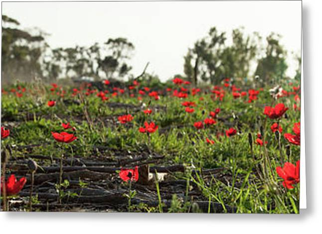 Greeting Card featuring the photograph Anemones Forest Panorama by Yoel Koskas