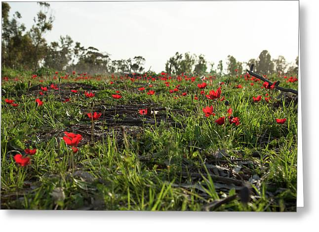 Greeting Card featuring the photograph Anemones Forest by Yoel Koskas