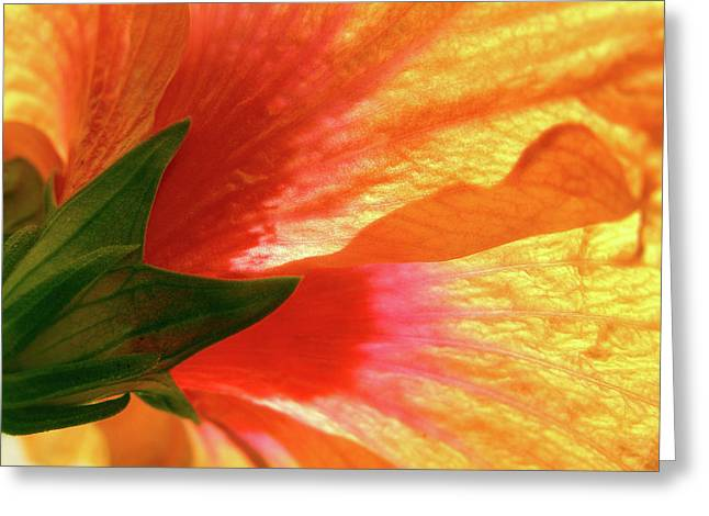 Greeting Card featuring the photograph Angel Brushstrokes  by Marie Hicks