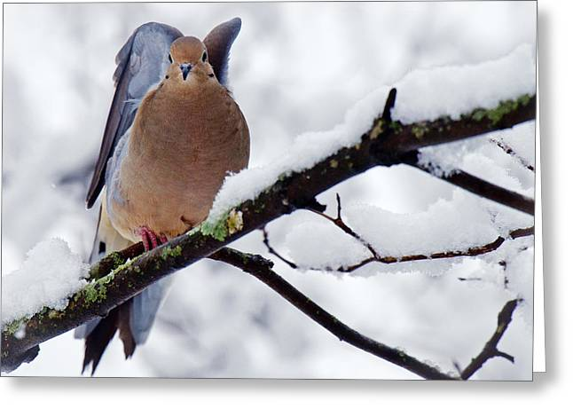 Greeting Card featuring the photograph Angel Mourning Dove by Angel Cher