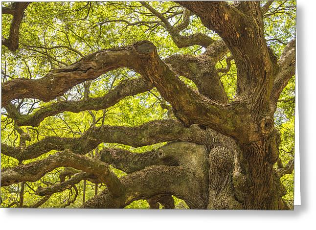 Greeting Card featuring the photograph Angel Oak I by Steven Ainsworth