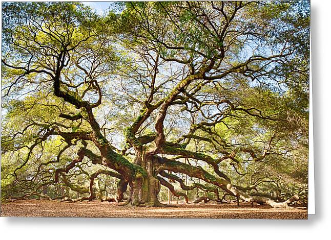 Angel Oak In Spring Greeting Card