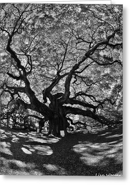 Greeting Card featuring the photograph Angel Oak Johns Island Black And White by Lisa Wooten