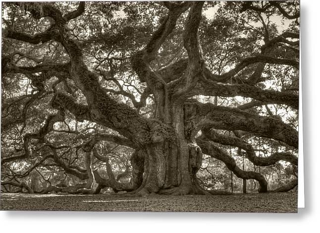Angel Oak Live Oak Tree Greeting Card by Dustin K Ryan