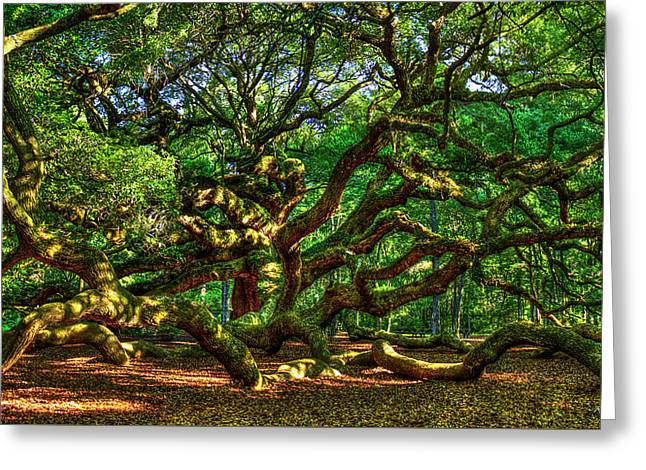 Angel Oak Morning Shadows Charleston South Carolina Greeting Card by Reid Callaway