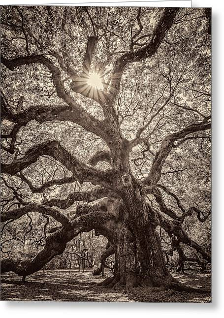 Angel Oak- Sun Beam  Greeting Card