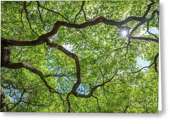 Angel Oak Tree Abstract  Greeting Card