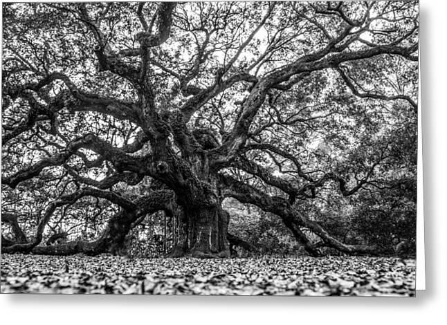 Angel Oak Tree Black And White  Greeting Card by John McGraw