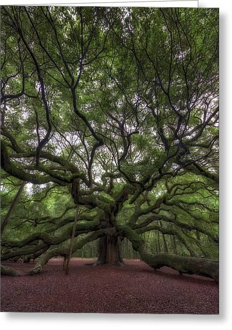 Angel Oak Tree, Charleston, Sc Greeting Card by Rick Berk