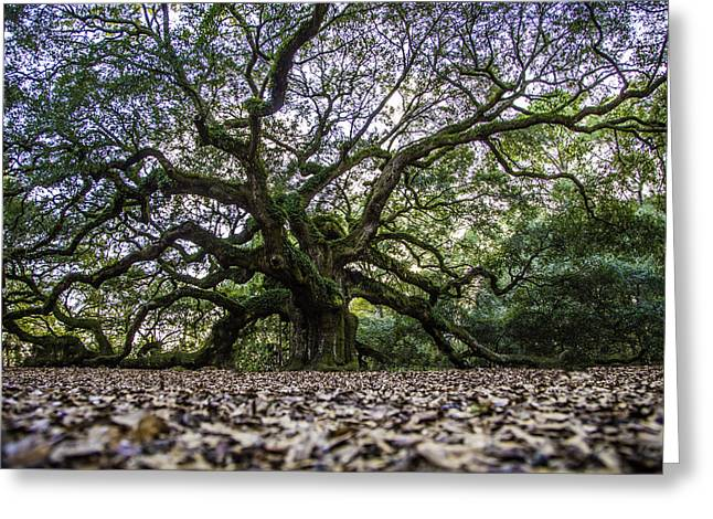 Angel Oak Tree In Color  Greeting Card by John McGraw